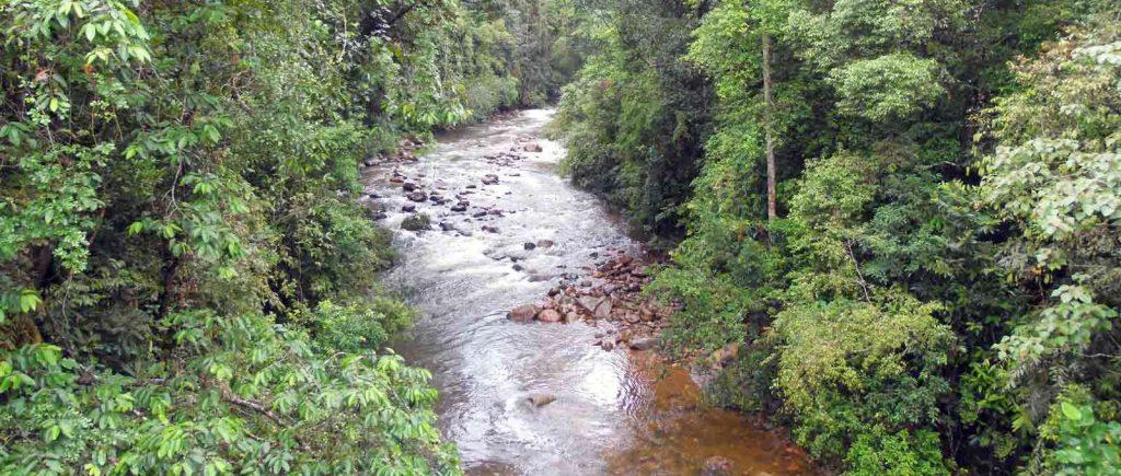 water stream sinharaja