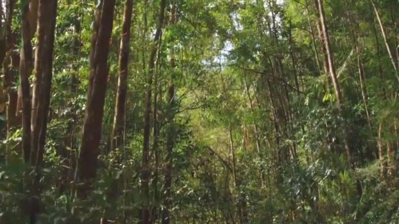 dense foliage of sinharaja forest