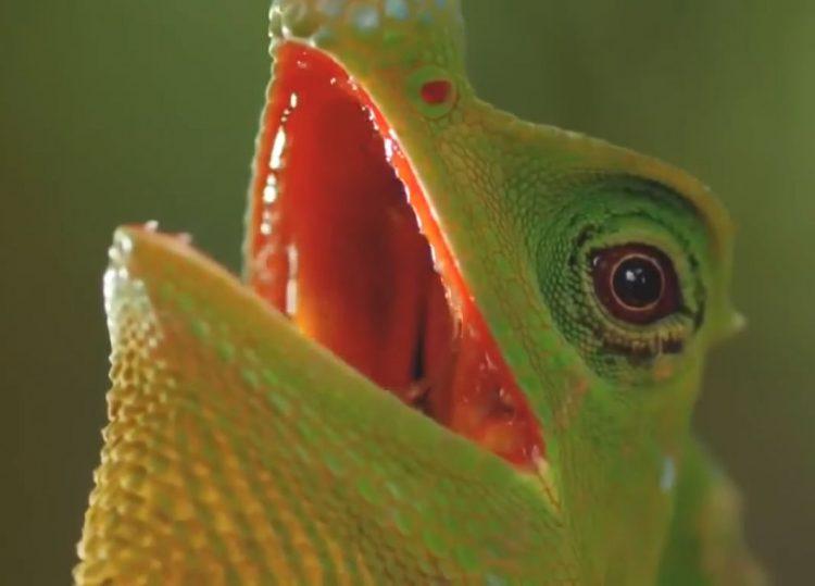 Bio-diversity of Sinharaja rain forest