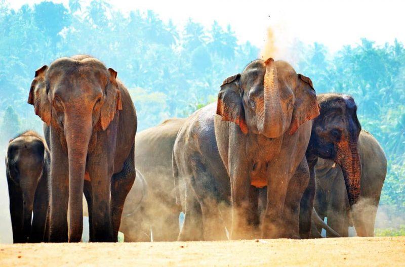 Sri Lanka road trip, road trip sri lanka