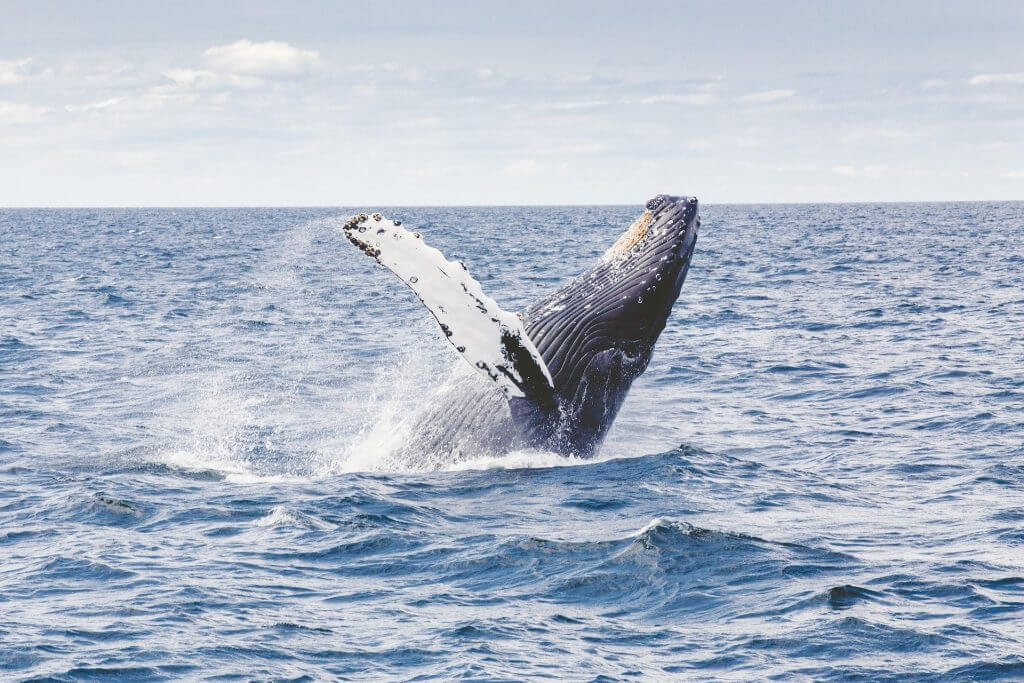 Planning a trip to Sri Lanka, sri lanka whale watching
