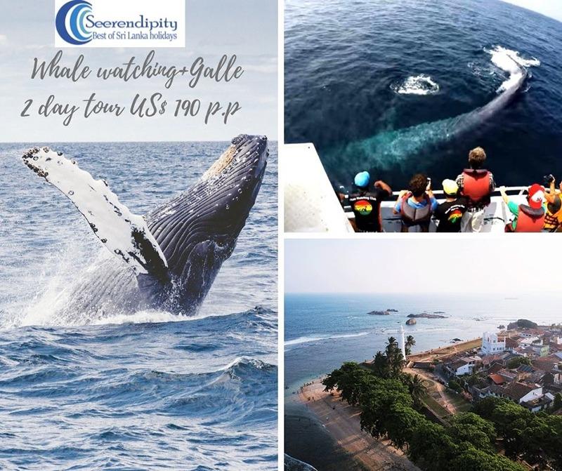 2 days Sri lanka tour galle and mirissa