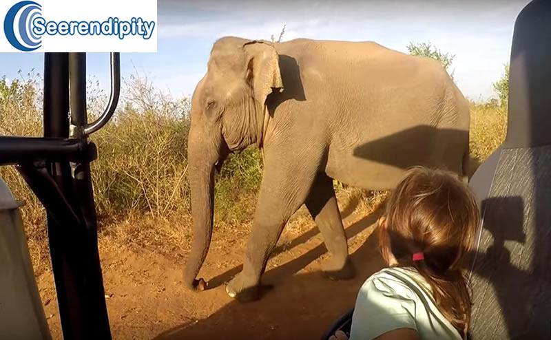 Udawalawe Safari Tours, best place to see elephants in sri lanka