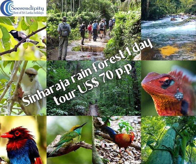 Sinharaja rain forest tour, SRI LANKA SAFARI HOLIDAYS, sri lanka safari, sri lanka safari tours, safari of Sri Lanka